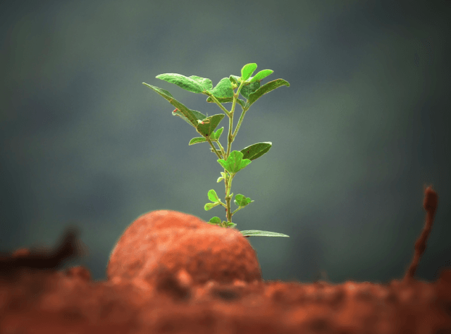 growing your agency